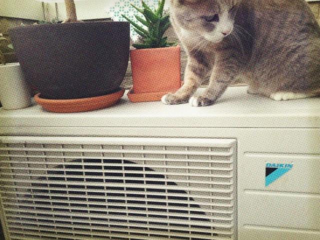 エアコンの室外機の上に植木鉢や猫を置かないようにしましょう