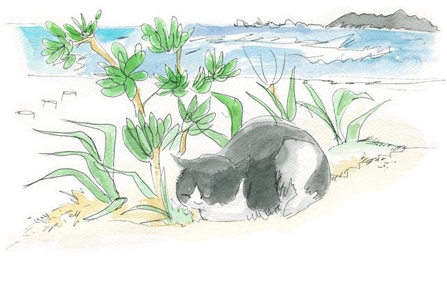 コンドイビーチ 木陰で香箱を組む猫