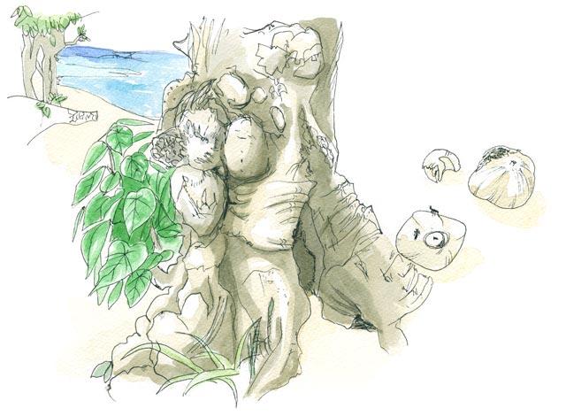 コンドイ浜の入口に生えるハスノハギリ