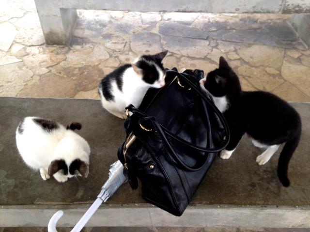 猫に鞄を漁られる