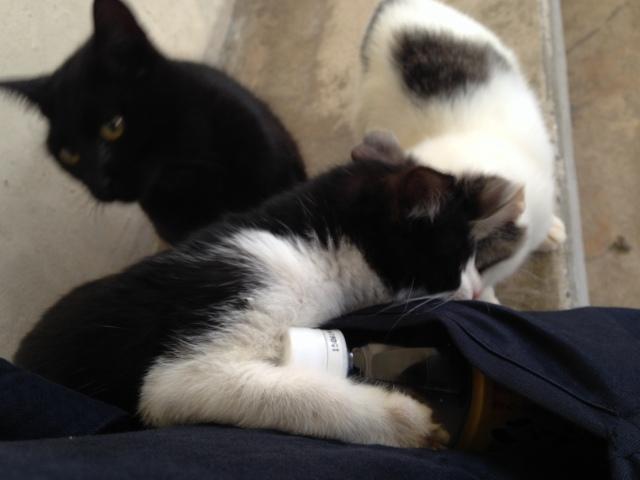 猫にポケットを漁られる