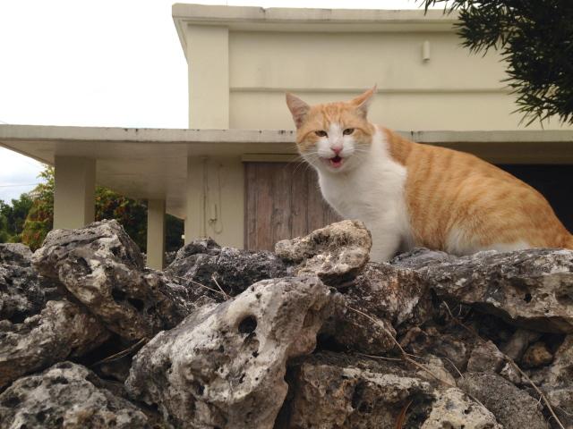 猫がめっちゃしゃべってくる@竹富島