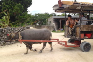 竹富島の牛車