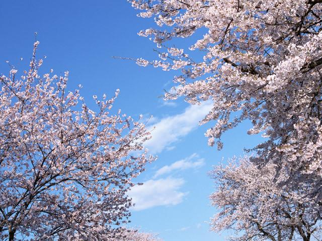 sakura-cloud