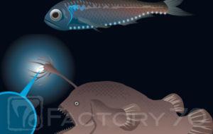 特別展「深海 2017」図録イラスト制作実績 発光する深海魚のイラスト