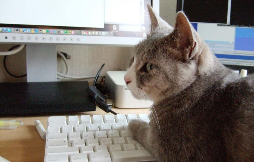 猫の手を借りて仕事