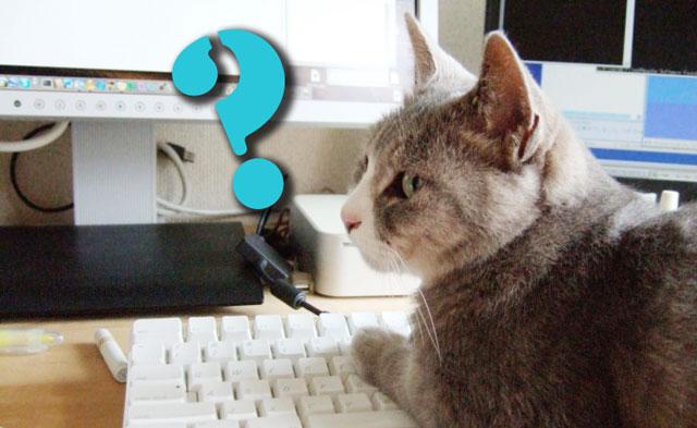 猫がパソコンで作業